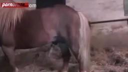 Зрелая баба с большой жопенью возбудила коника до оргазма интим зоо в качестве HD